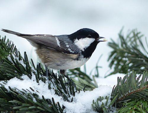 Landesbund für Vogelschutz ruft zum Vögelzählen auf